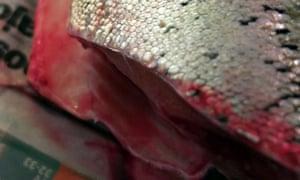 Deveron cured trout