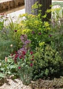 Dianthus cruentus in Cleve West's show garden at Chelsea 2011
