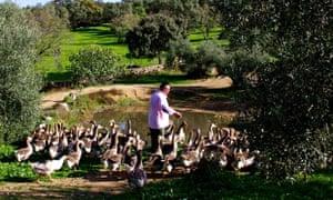 Eduardo Sousa with his geese
