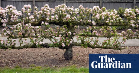 Trained Fruit In Pictures Life And Style The Guardian