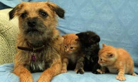 ANIMALS Kittens 2