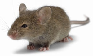 The best laid traps of mice and men | Money | The Guardian