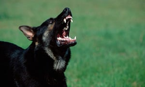 How can we stop the neighbour's dog barking? | Money | The