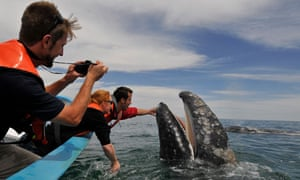 Photographer taking picture of grey whale