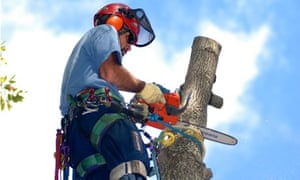 Tree surgeon up in a tree