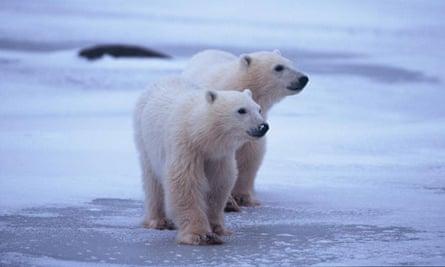 Polar Bear Week