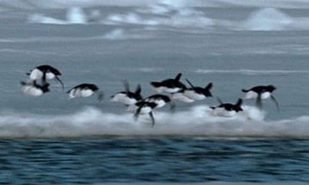 Flying penguins April Fools' story