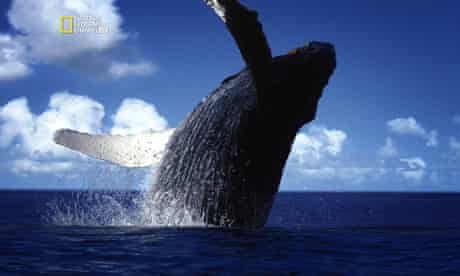 A whale in a National Geographic show for Sky HD ad