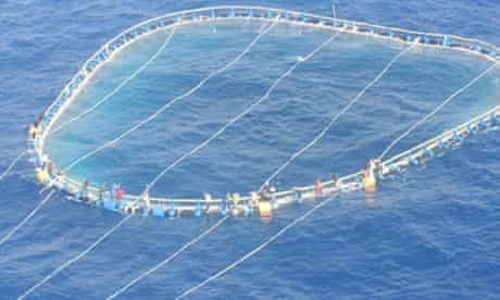 Tuna net immigrants