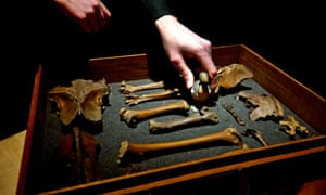 Dodo bones found at Grant Muuseum