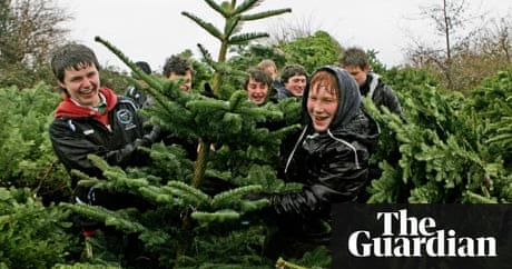 How to buy the right christmas tree money the guardian for Christmas decs sale