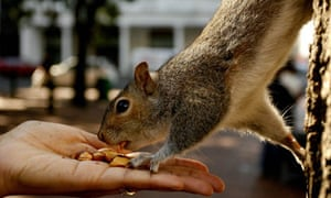 A person feeds nuts to a squirrel