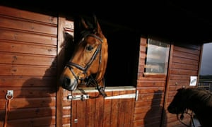 got a horse don 39 t gamble on its health money the guardian. Black Bedroom Furniture Sets. Home Design Ideas