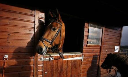 Got a horse? Don't gamble on its health | Pet insurance ...