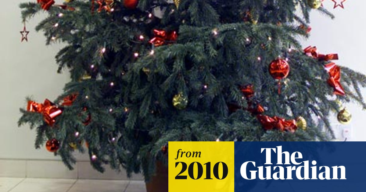 Replantable Christmas Trees Are Festive Success Story Money The
