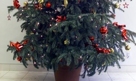 Replantable Christmas trees are festive success story | Money | The Guardian - Replantable Christmas Trees Are Festive Success Story Money The