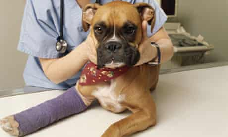 Should I offer to pay a veterinary bill?