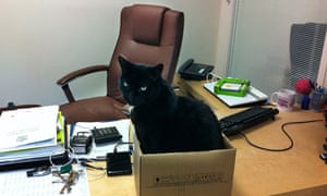 Back Chat. Office cat. Pets at work