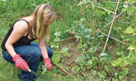 A lady tends to her allotment