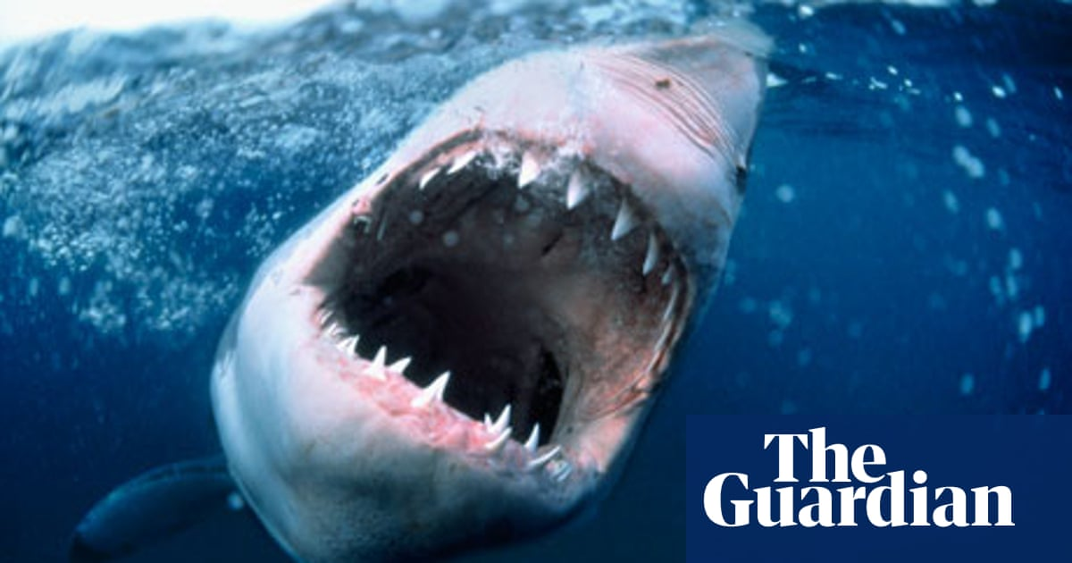Shark By Will Self Review A Dazzling Followup To Umbrella Books