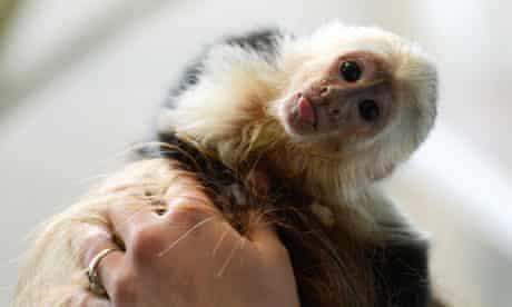 Justin Bieber's capuchin monkey