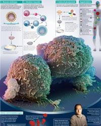 Pathways to pluripotent stem cells