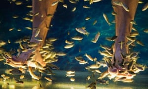 foot fish massage