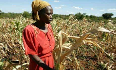 Zimbabwe peasant farmer