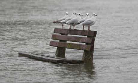 Gulls perch on a bench in flooded Pangbourne, Berkshire