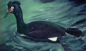 spectacledcormorant