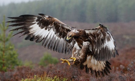 Why The Claws Are Out For The Rspb Birds The Guardian