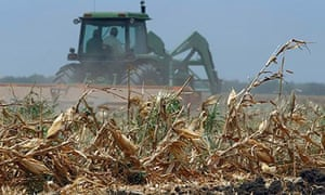 Farming corn