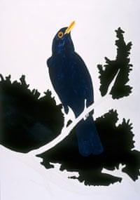 hume blackbird