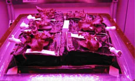 Nasa's Veggie vegetable production system