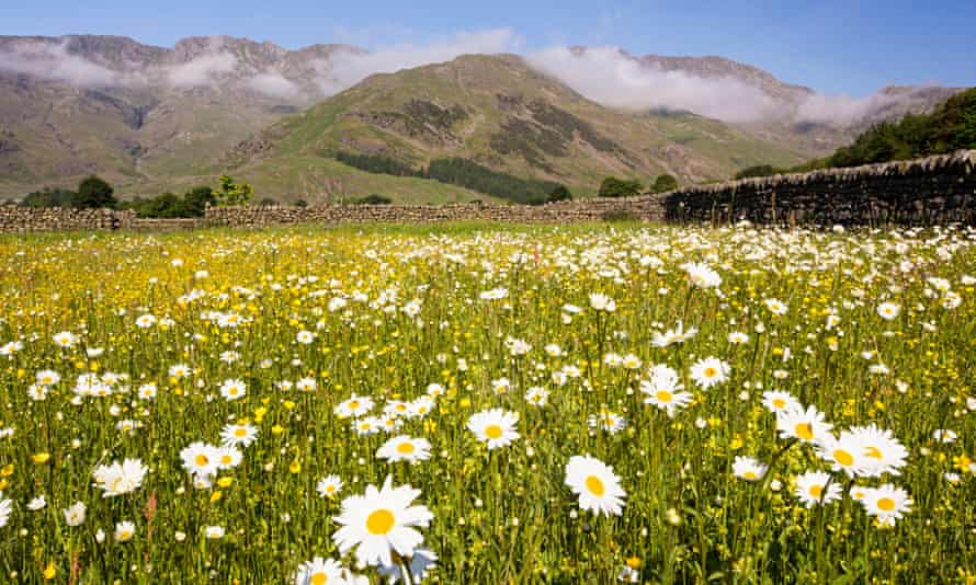 Wild Flower Hay Meadows Seen At Lake District National Park, England
