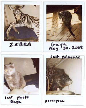 Observer Review Polaroids: Nan Goldin's Polaroids of a stuffed zebra, porcupine and her cat Gaya