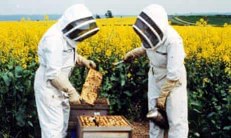 Bee Keeper Brian Durk