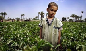 Child Labor in Egypts Cotton fields