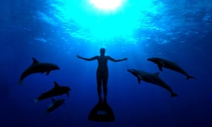the-cove-dolphins