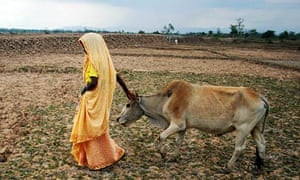 Woman walks with her cow in Assam