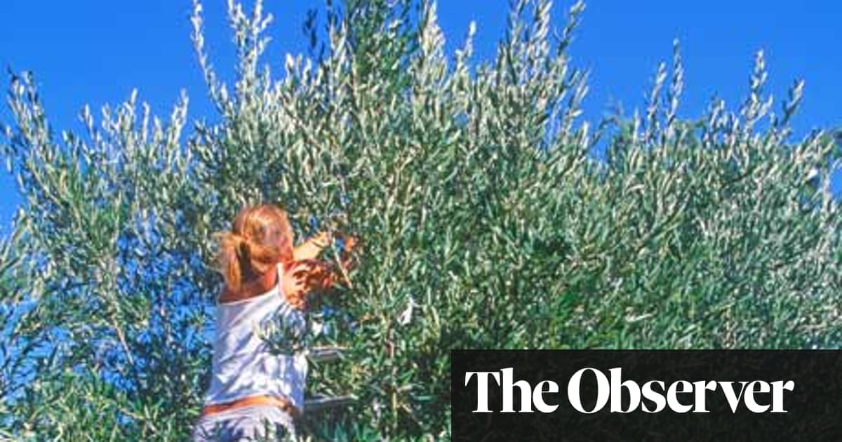 From tree to tapas: a crash course in all things olive | Travel