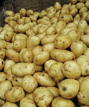 Food waste: rejected Potatoes