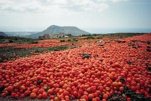 Food waste: Tomato Dump