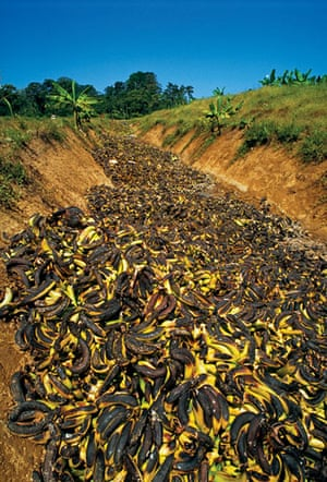 Food waste: Bananas Dumped in Ditch