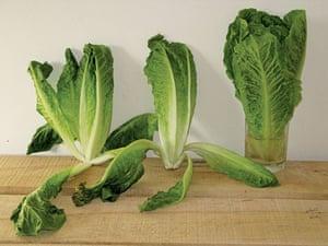Food waste: Three Lettuces