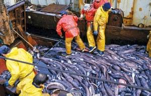 Food waste: Unwanted fish