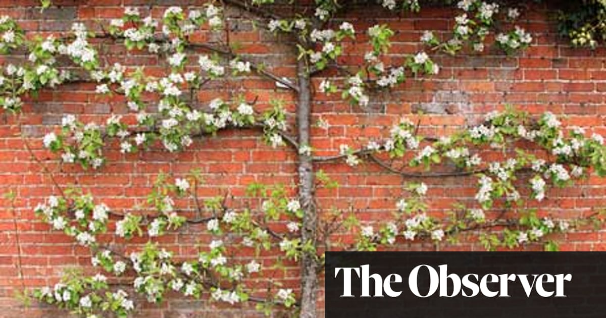 Gardens How To Grow Fruit Trees Dan Pearson Life And Style
