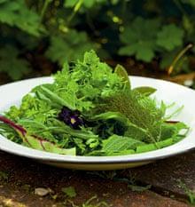 A green herb salad