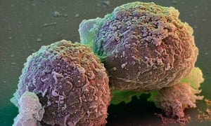 Look No Embryos The Future Of Ethical Stem Cells