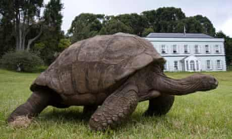 A 180-year-old pet tortoise St Helena